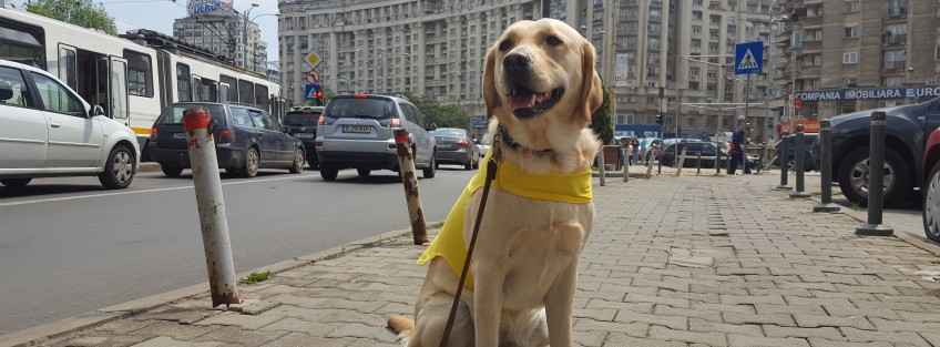 How you can support the Guide Dog for the Blind in Romania project